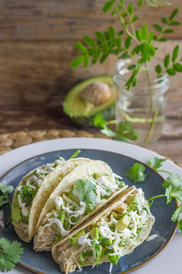 Easy Creamy Crockpot Salsa Verde Chicken in crunchy taco shells with shredded lettuce, diced avocado, sour cream and cilantro, on a plate, with a halved avocado in the background along with some greenery in a glass jar.