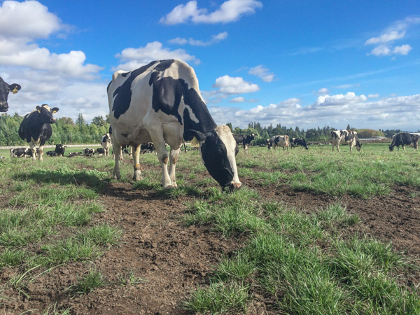 Pacific Foods - Pasture to Plate