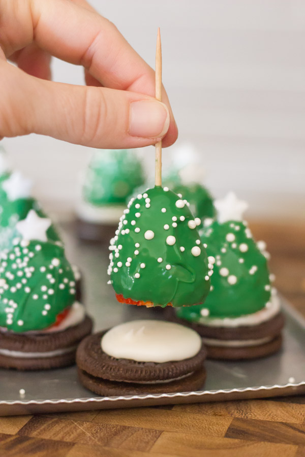 A candy coated strawberry on a toothpick being placed on an Oreo covered with icing, with completed Covered Strawberry Christmas Trees in the background.